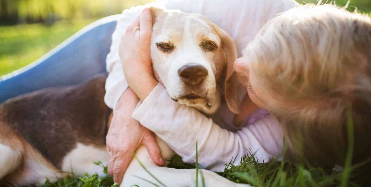 analogizes human caring for their anxious pet