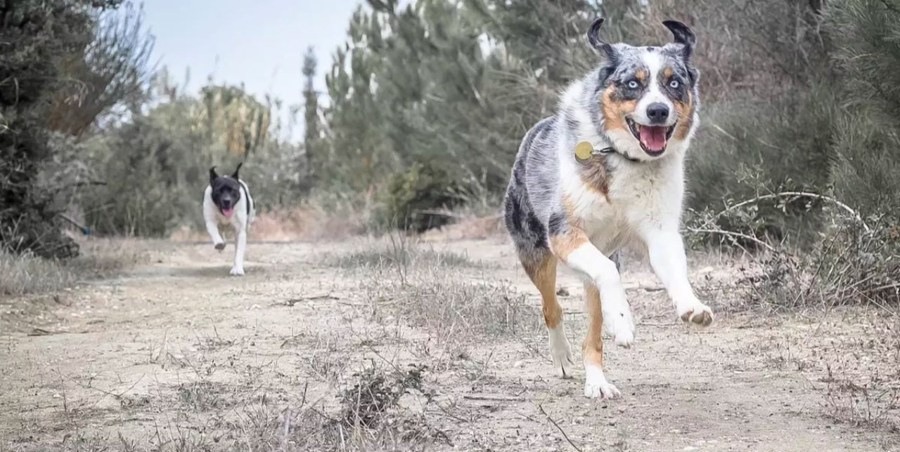 visualizes healthy dogs enjoying benefits of cbd oil