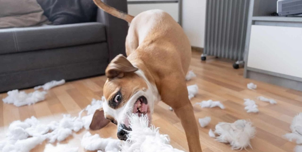 visualizes dog behavior when you don't know how to stop your dog chewing everything